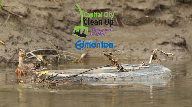 capcitycleanup