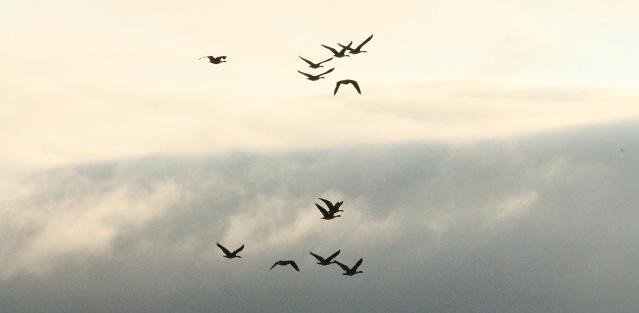 cloudpornbirds